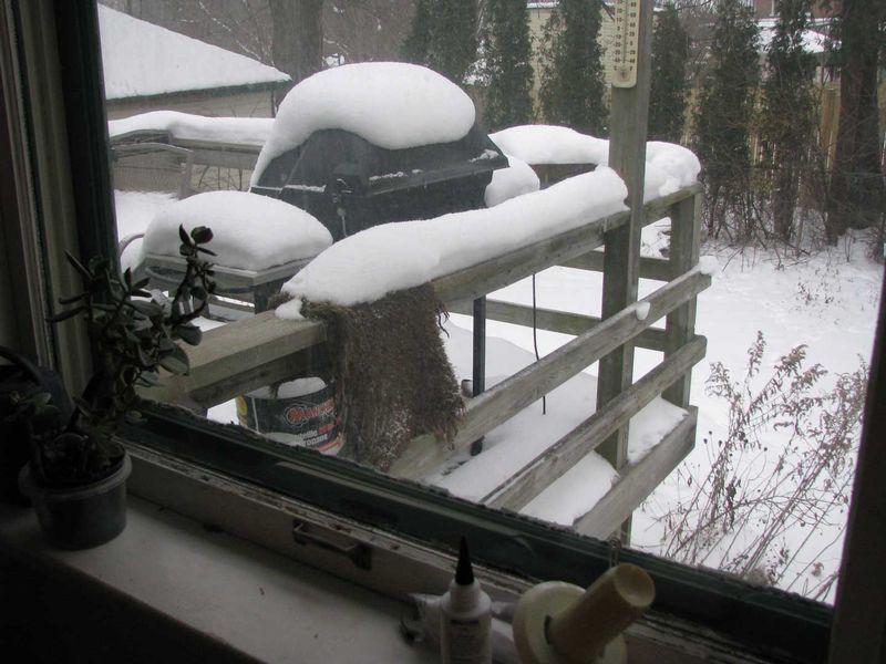SnowyGrayPyucky